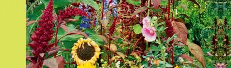Edible × Schoolyard <Edible Schoolyard プロジェクトのエッセンス> 吉開俊也